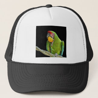 Parrot - cap