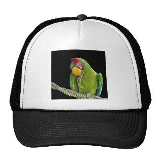 Parrot - cap hat