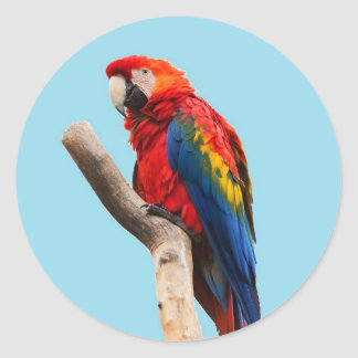 Parrot Classic Round Sticker