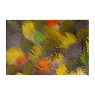 Parrot Feather Design Acrylic Print
