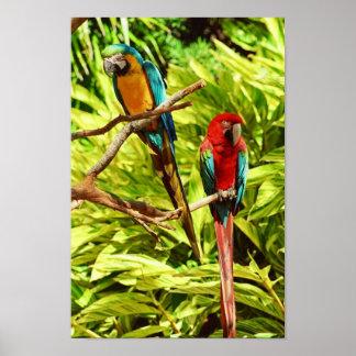 Parrot Friends Poster