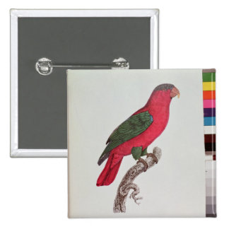 Parrot: Lory or Collared 15 Cm Square Badge