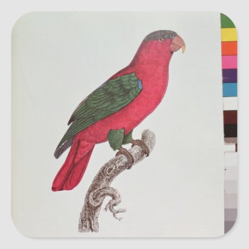 Parrot: Lory or Collared Sticker