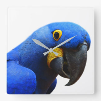 Parrot macaw tropical animal photo square wall clock