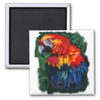 Parrot Magnet