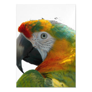 Parrot Magnetic Invitations