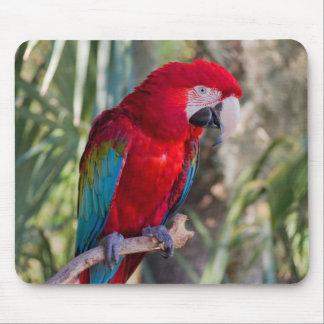 Parrot Mouse Mat