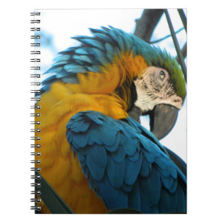 Parrot Note Book
