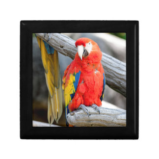 parrot on its perch gift box