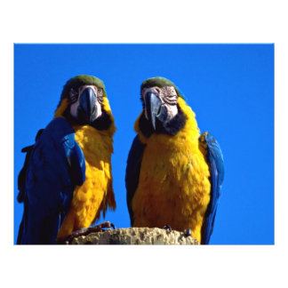 Parrot pair custom flyer