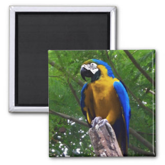 Parrot Pose ~ Square Magnet