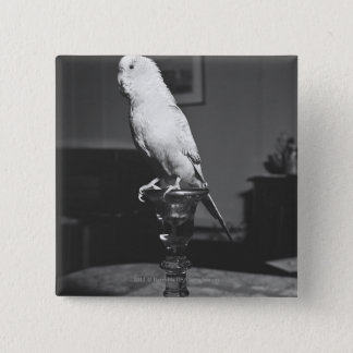 Parrot sitting on candlestick B&W 15 Cm Square Badge