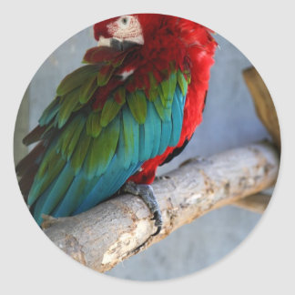 parrot stickers