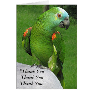 Parrot Thank You Greeting Card
