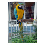 Parrot Waving Hello Card- Just a note to say hi...