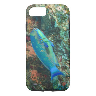 Parrotfish near Taveuni Island, Fiji, South iPhone 8/7 Case