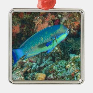 Parrotfish near Taveuni Island, Fiji, South Silver-Colored Square Decoration