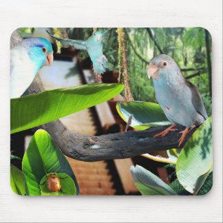 Parrotlet Bird Amazon Jungle Rain Forest mousepad