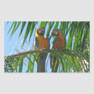 Parrots- Blue and Gold Macaws Rectangular Sticker