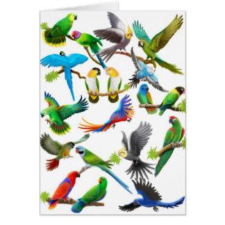 Parrots Galore Card