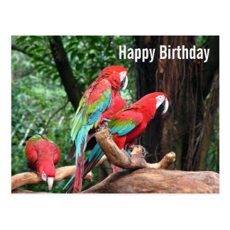 Parrots Happy Birthday card Postcard