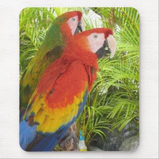 Parrots Mouse Mat