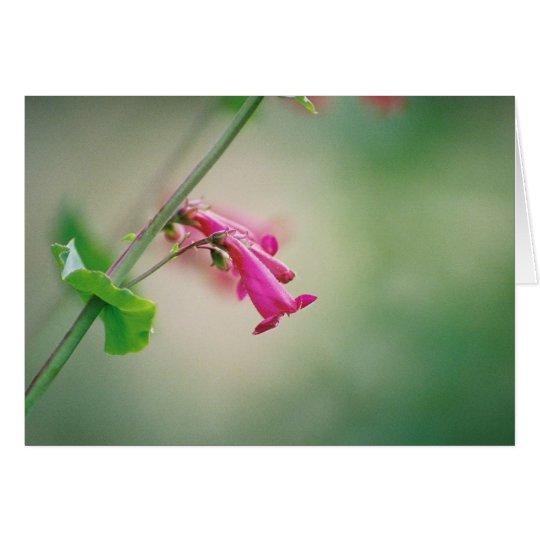 Parry's Penstemon, Arizona Wildflower Card