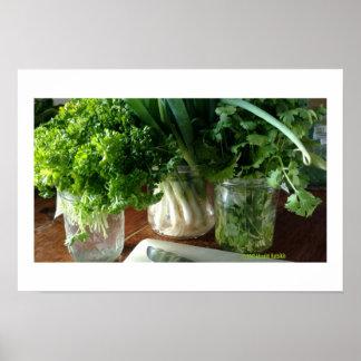 Parsley, Cilantro & Green Onions Poster