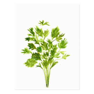 Parsley herbs Parsley print Postcard