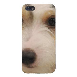 Parson's Terrier iPhone 5/5S Cases
