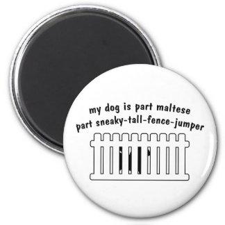 Part Maltese Part Fence-Jumper Magnet