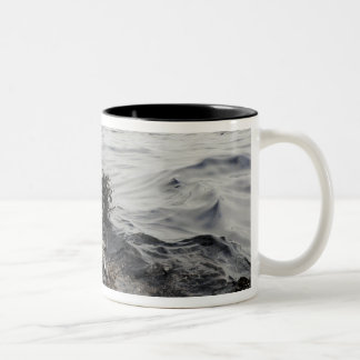 Part of an oil slick in the Gulf of Mexico Two-Tone Coffee Mug