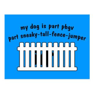 Part PBGV Part Fence-Jumper Postcard
