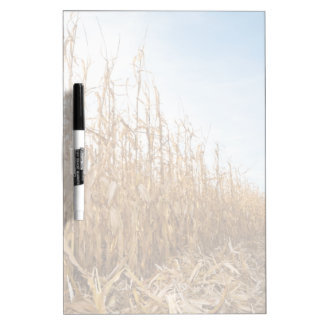 Partly Harvested Corn Field Dry Erase Board