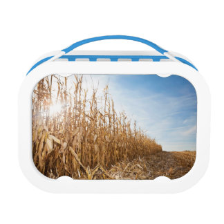 Partly Harvested Corn Field Lunchboxes