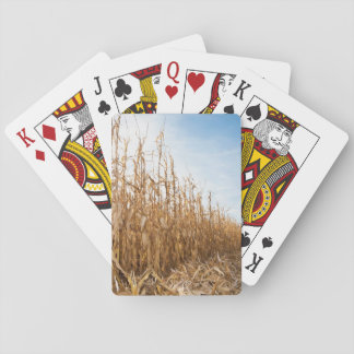 Partly Harvested Corn Field Playing Cards