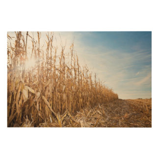 Partly Harvested Corn Field Wood Wall Decor