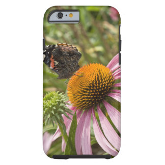 partnership, symbiotic, helping, beauty, tough iPhone 6 case