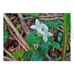 Partridge Berry Wildflower Greeting Card