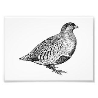 Partridge Bird Art Photo Print