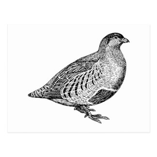 Partridge Bird Art Postcard
