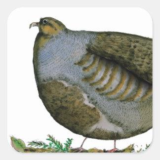 partridge bird, tony fernandes square sticker