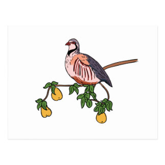 Partridge in a Pear Tree Postcard