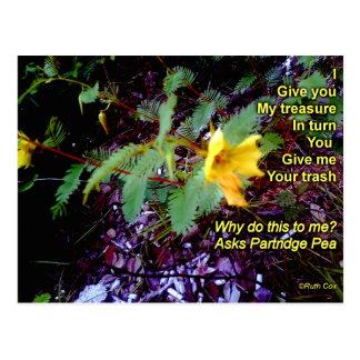 Partridge Pea Wildflower Trash Postcard