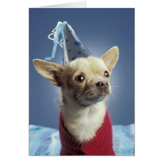 Party Dog Birthday Card