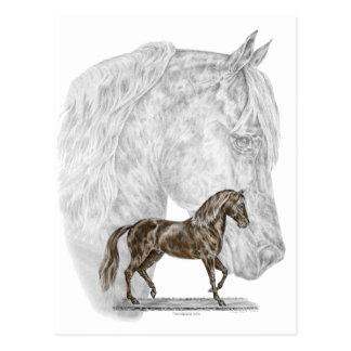 Paso Fino Horse Art Postcard