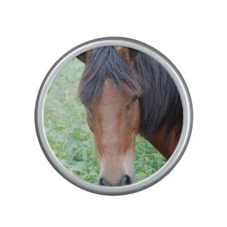 Paso Fino Horse Speaker