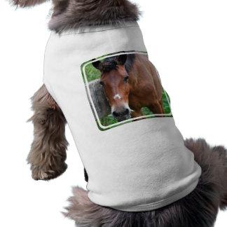 Paso Fino Horse Pet Shirt