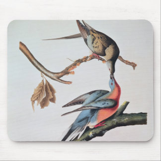 Passenger Pigeon from Birds of America Mousepads