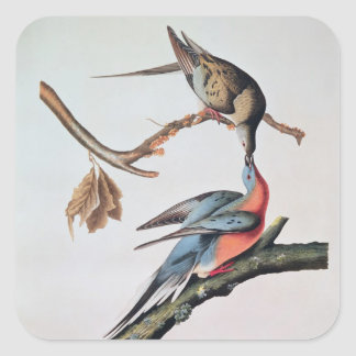 Passenger Pigeon, from 'Birds of America' Square Sticker